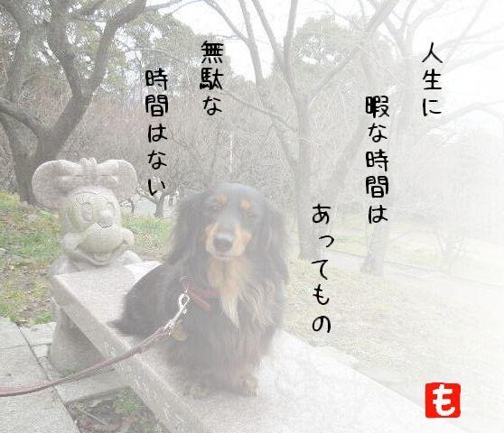 momo_j1.jpg